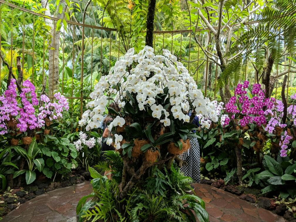 Bosquet d'orchidées blanches