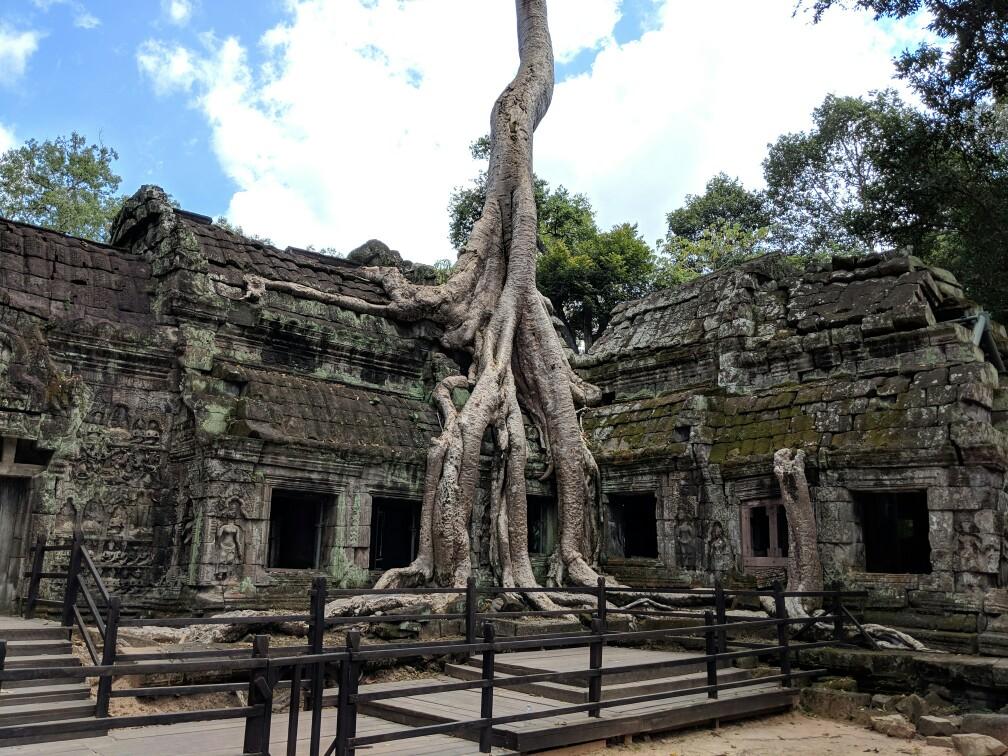 Tronc d'arbre entremêlé à des ruines sur le site des temples d'Angkor