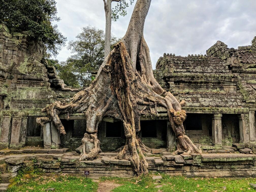 Gallerie écrasée par un arbre au temple de Preah Khan, Cambodge