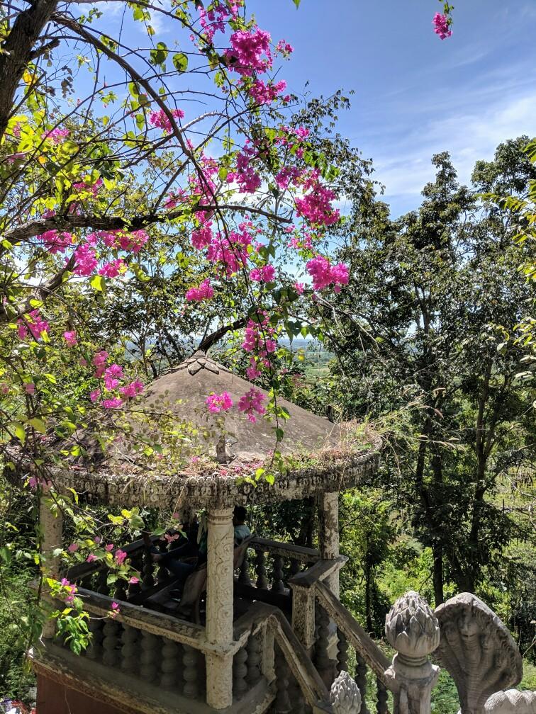 Fleurs à Phnom Srei près de Kampong Cham, Cambodge