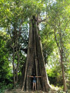 Salomé fait un gros hug à un arbre géant sur l'île de Koh Trong, Cambodge
