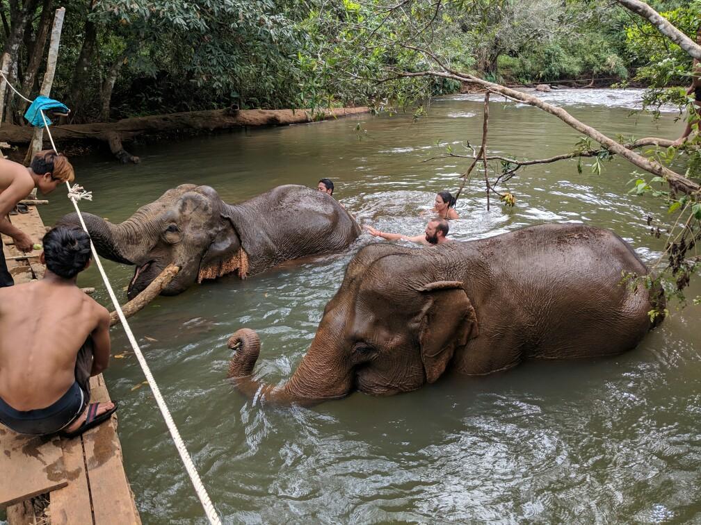 Deux éléphants prennent leur bain en notre compagnie près de Sen Monorom, Cambodge
