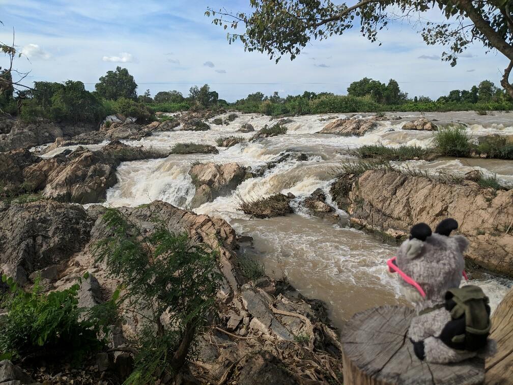 Biquette regarde les chutes de Li Phi sur Don Khone, Laos