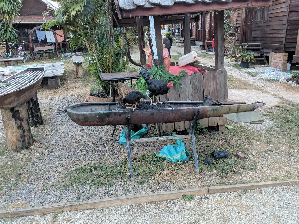 Barbecue fait à partir d'un obus avec des poules dessus à Sabaidee Guesthouse, Laos