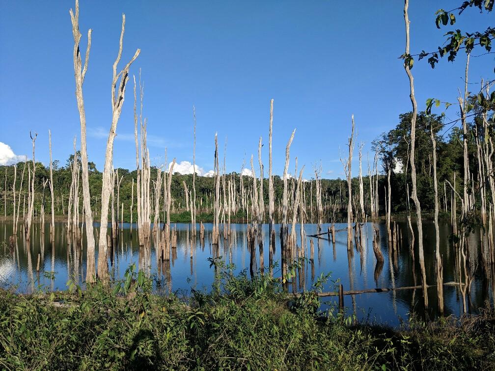 Arbres morts se réfléchissant sur l'eau près de Thalang, Laos