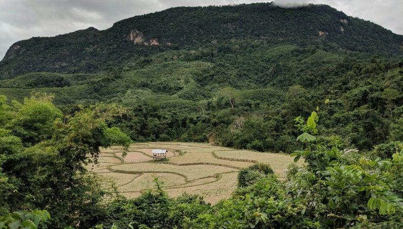 Vue sur un champs près de Muang Ngoi, Laos