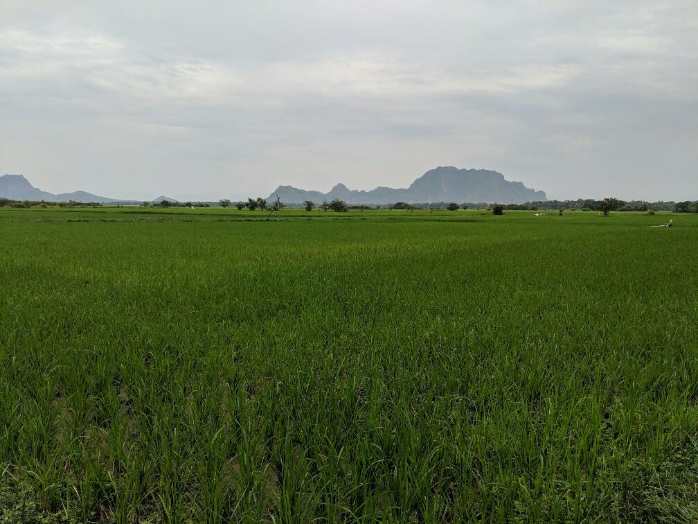 Rizières près de Hpa-An en Birmanie