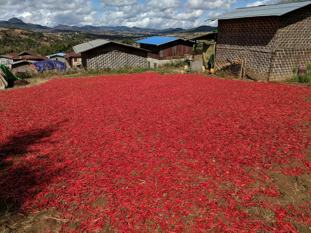 Piments rouges qui sèchent au soleil sur le trek entre Kalaw et Inle en Birmanie