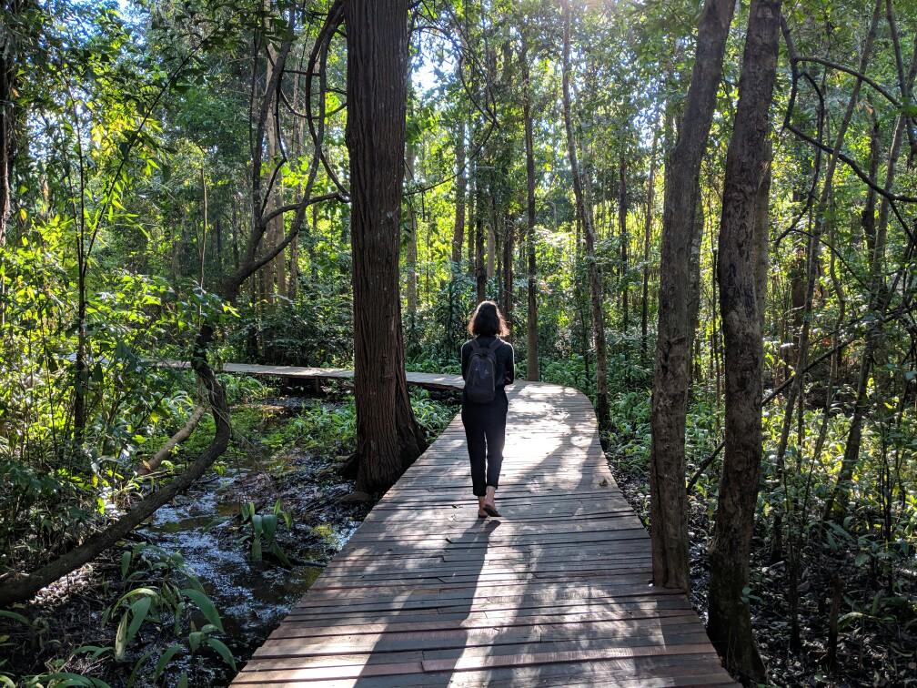 Passerelle de bois dans les marécages du jardin botanique de Pyin Oo Lwyn en Birmanie