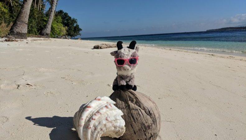 Biquette posée sur une noix de coco et un coquillage sur la plage