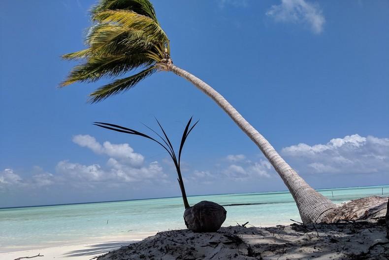 Une pousse de cocotier émerge d'une noix de coco avec en arrière-plan un grand cocotier penché sur la plage paradisiaque de l'île d'Onok
