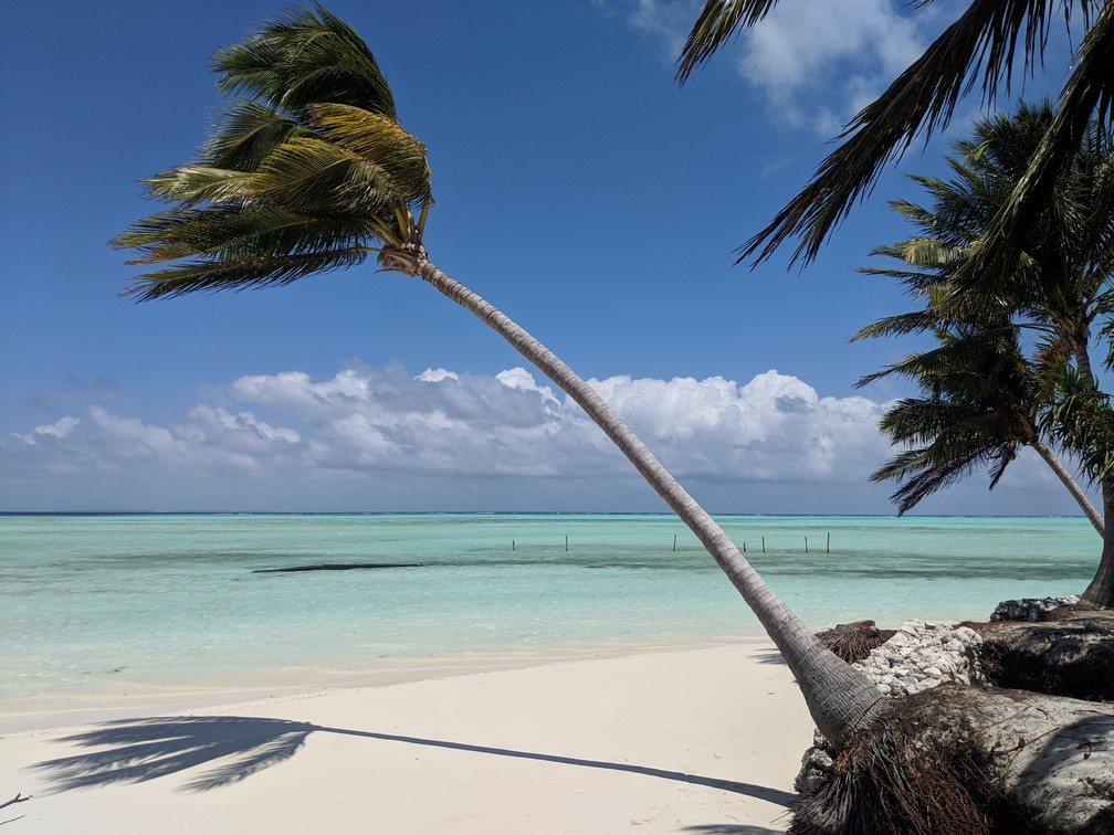 Un grand cocotier est fortement penché sur la plage devant la mer turquoise d'Onok island