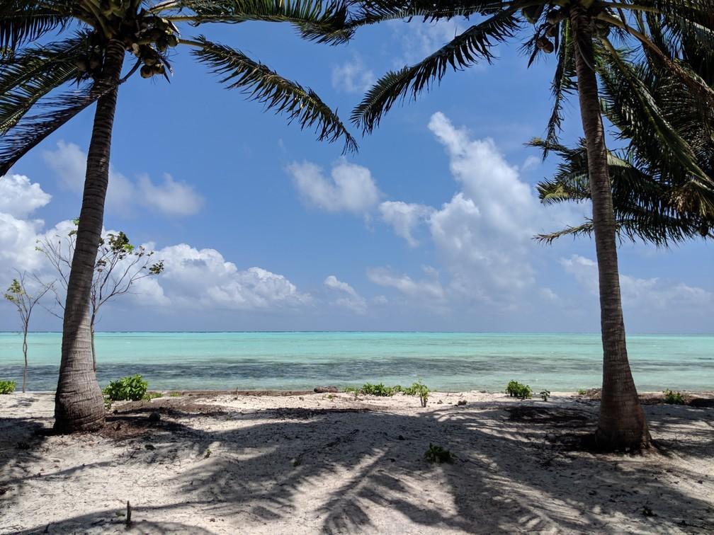 La mer turquoise apparait entre deux cocotiers à Onok island