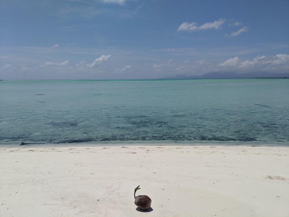 Une jeune pousse de cocotier sortant de sa noix est posée sur la plage devant la mer turquoise d'Onok island