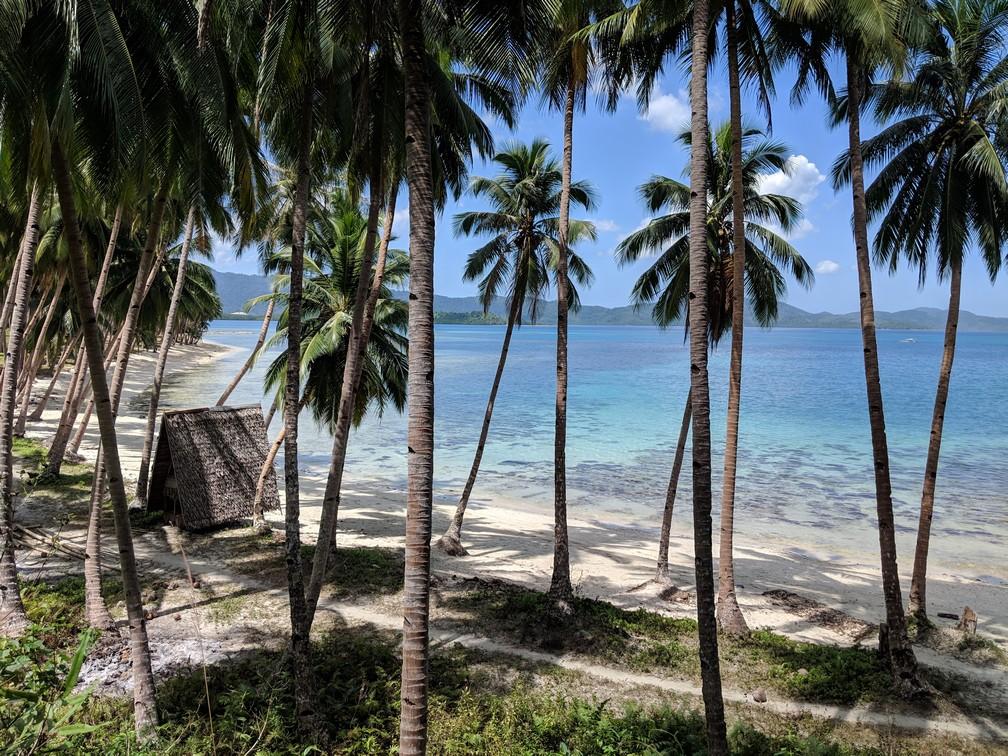 Coconut Beach vue du haut avec la plage qui se dessine derrière d'immenses cocotiers