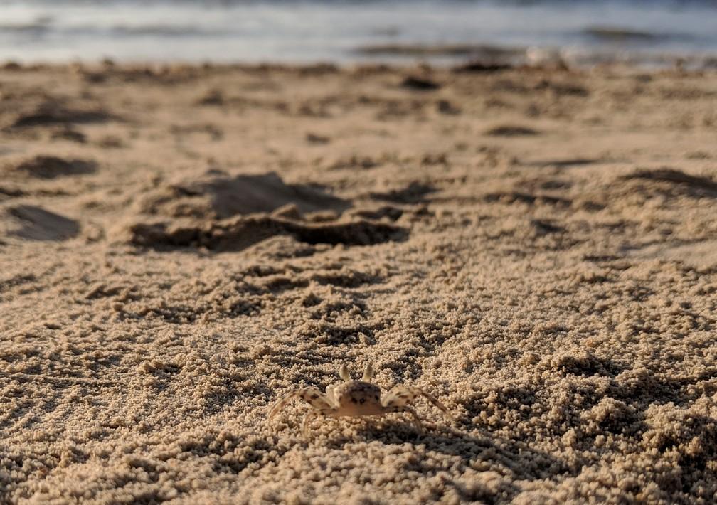 Crabe devant la mer sur Coconut Beach