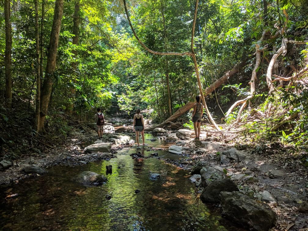 Quentin, Elodie et Salomé marchent dans la jungle de Koh Lanta le long d'un ruisseau