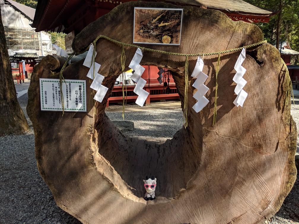 La Biquette dans un énorme tronc creux couché au sanctuaire Futurasan