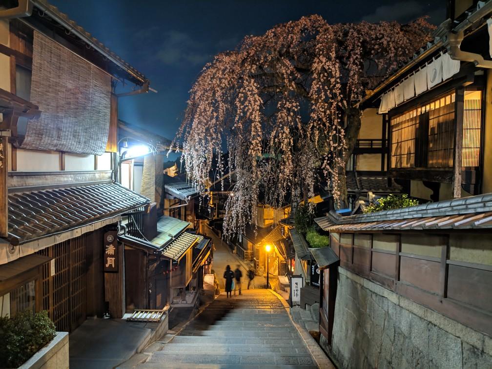 Un cerisier surplombe un escalier; ils sont éclairés par un lampadaire car la nuit est tombée