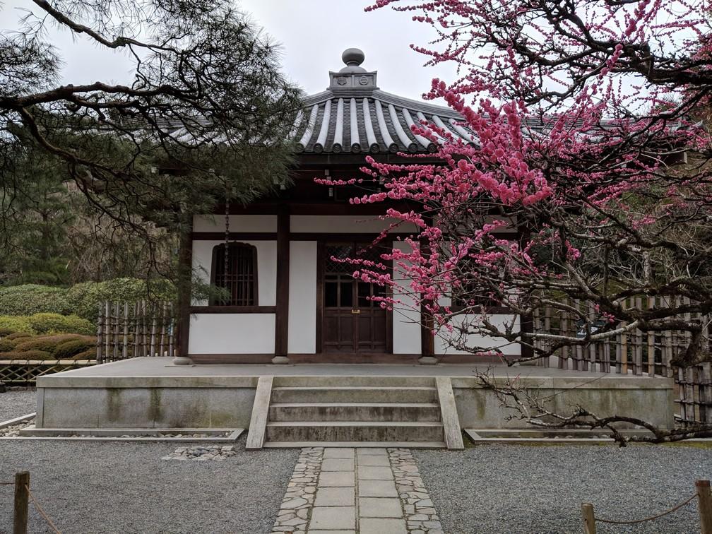 Un petit pavillon avec un cerisier en fleur devant