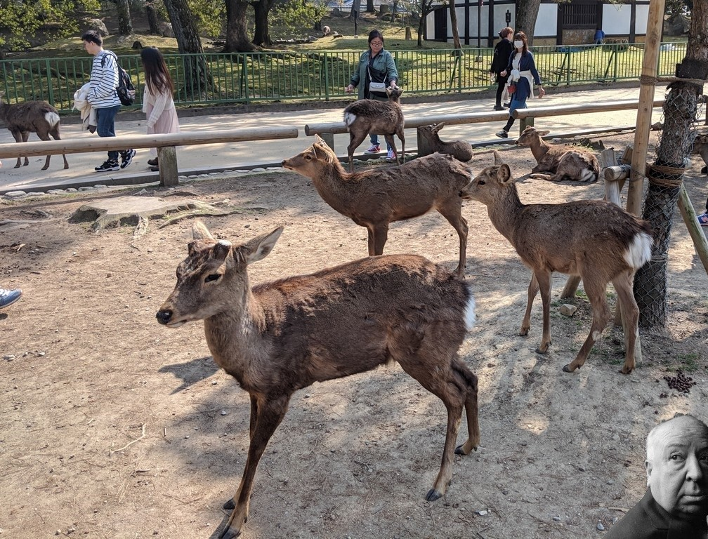 Des daims se baladent dans le parc de Nara