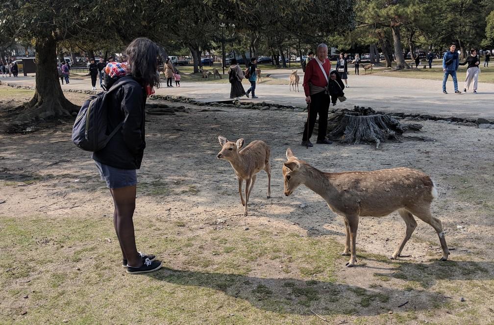 Deux daims approchent Salomé dans le parc de Nara