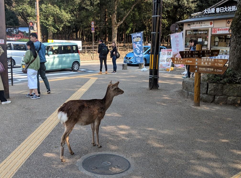 Un daim se tient devant des panneaux d'orientation