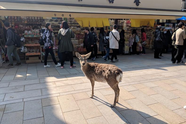 Un daim pose devant des boutiques visitées par des touristes