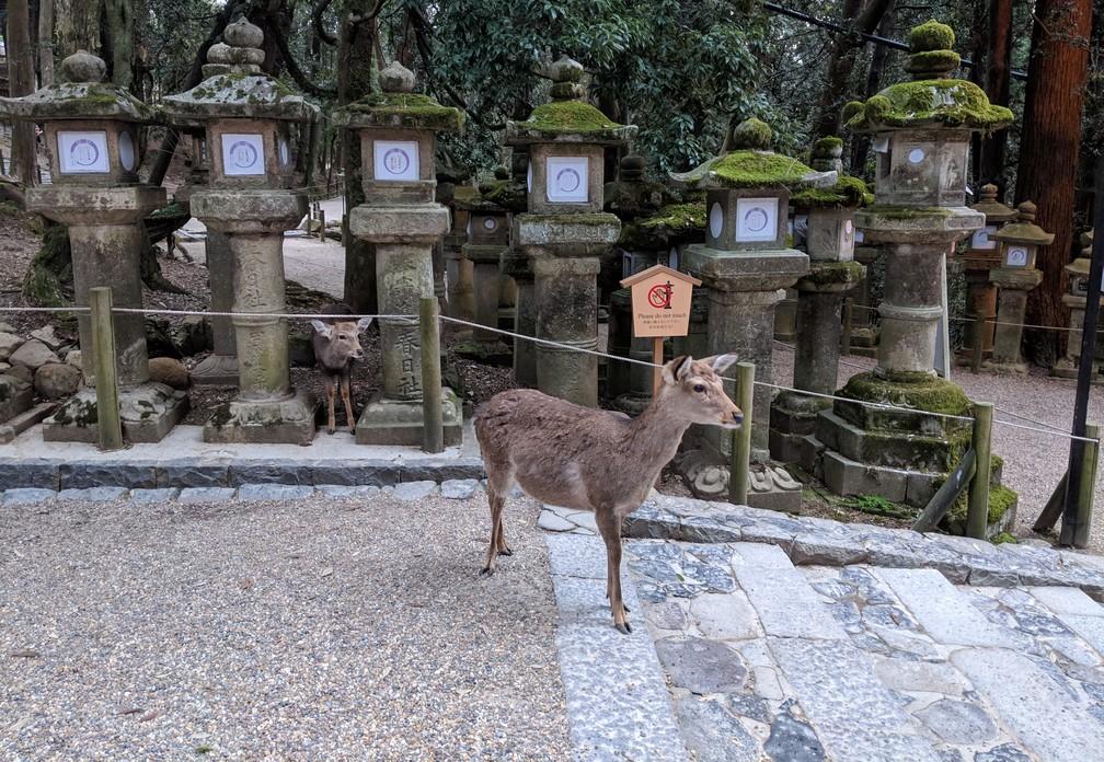Un daim est debout devant des poteaux religieux