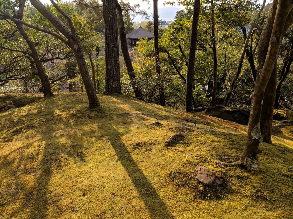 Un parterre de mousse entre les arbres qui surplombent le temple de Ginkaku-Ji