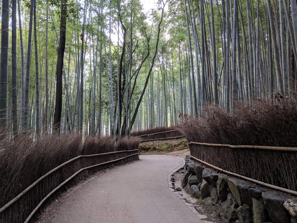 Une allée qui tourne dans la forêt de bambous
