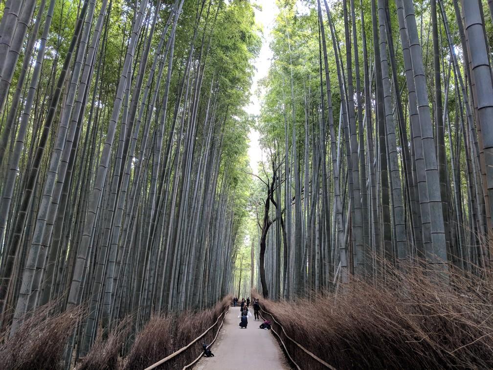 Une allée droite avec de grands bambous de chaque côté