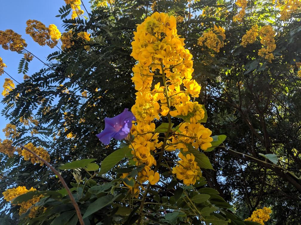 Une blelle fleur jaune et une violette