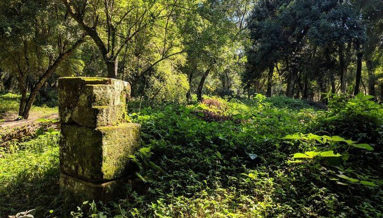 Blocs de pierre dans la jungle près de San Ignacio