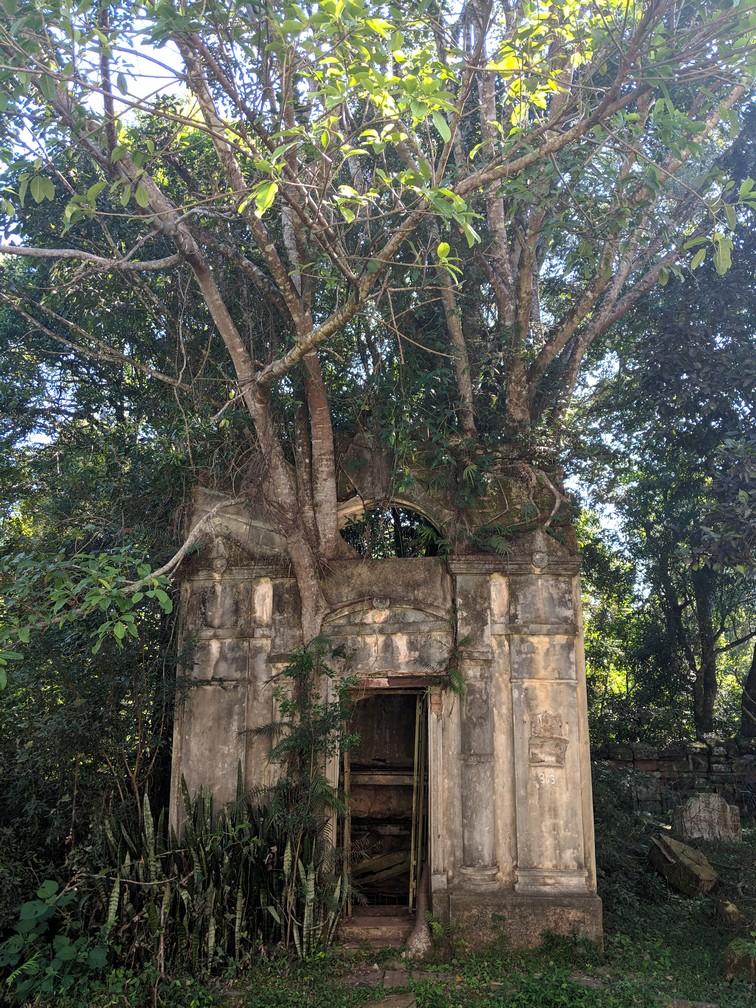 Une arbre pousse sur une stèle dans le cimetière dans la mission de Santa Ana