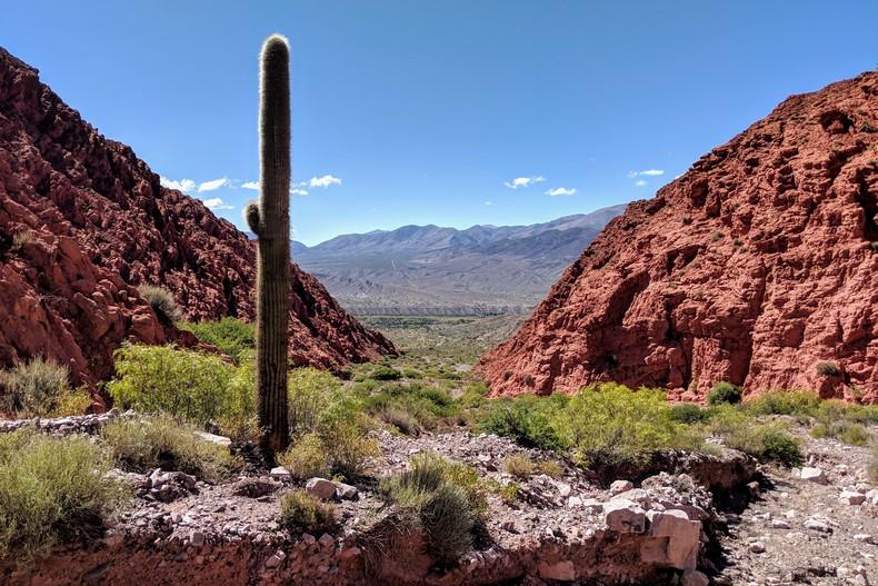 Un cactus se dresse dans Quebrada de Las Señoritas