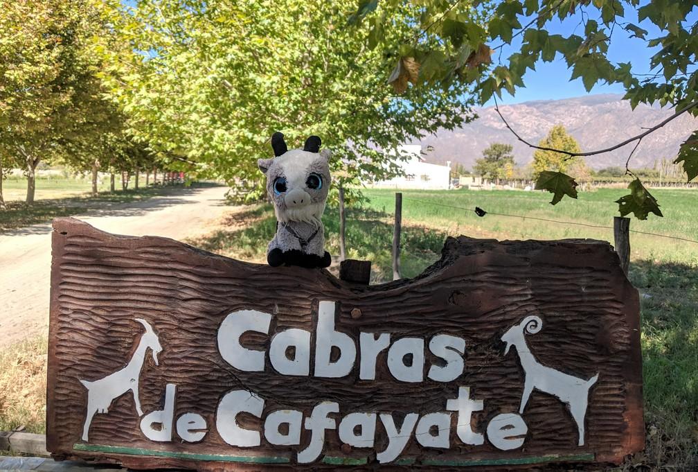 La Biquette se tient sur l'enseigne de la ferme Cabras de Cafayate