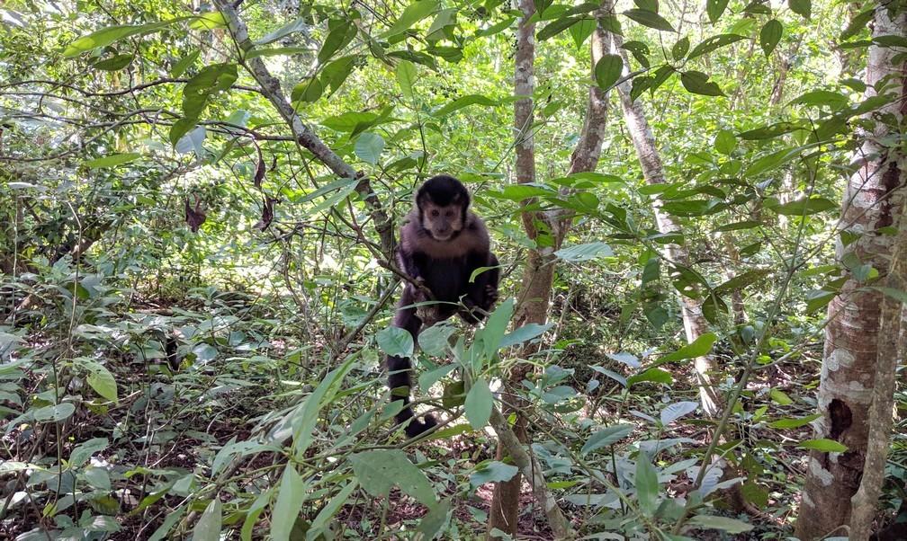 Petit singe noir dans un arbre à Iguazu