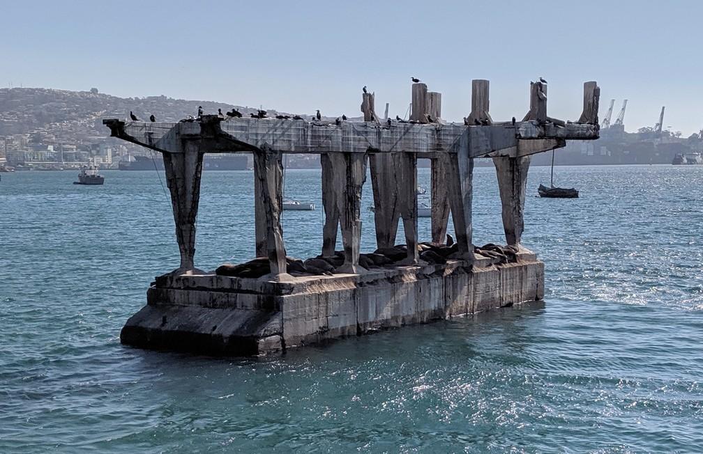 Des lions de mer se reposent sur une plateforme de béton au milieu de la baie à Valparaiso