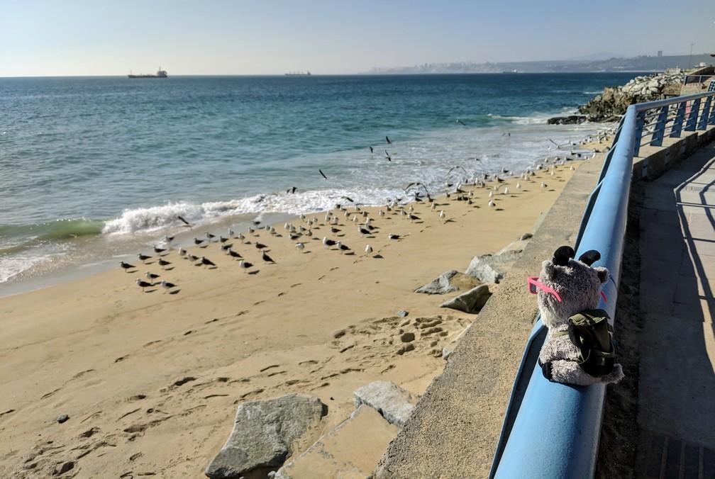 La petite Biquette regarde les mouettes au bord de la plage à Valparaiso