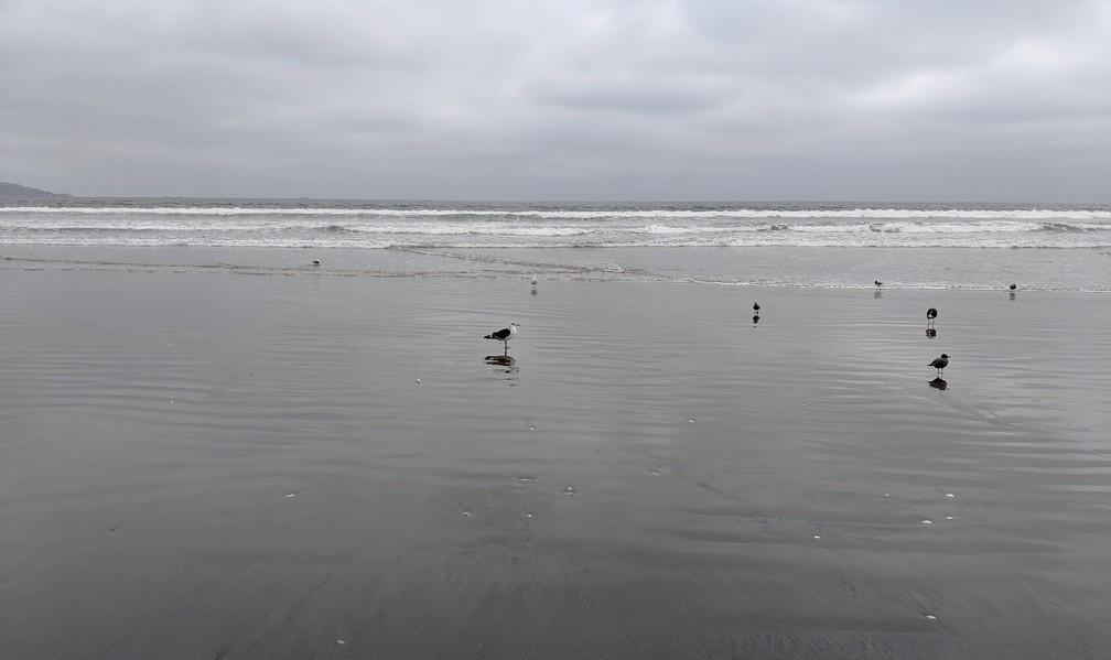 Bord de mer par temps gris avec des mouettes à La Serena