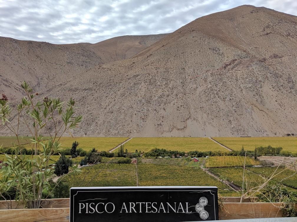 Montagne devant des vignes pour le pisco dans la vallée d'Elqui