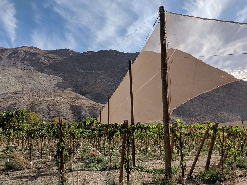 Une grande toile se dresse au dessus d'une vigne dans la vallée d'Elqui pour protéger du vent