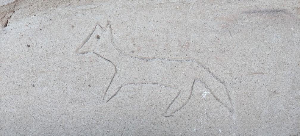 Un renard visiblement gravé par un touriste à Yerba