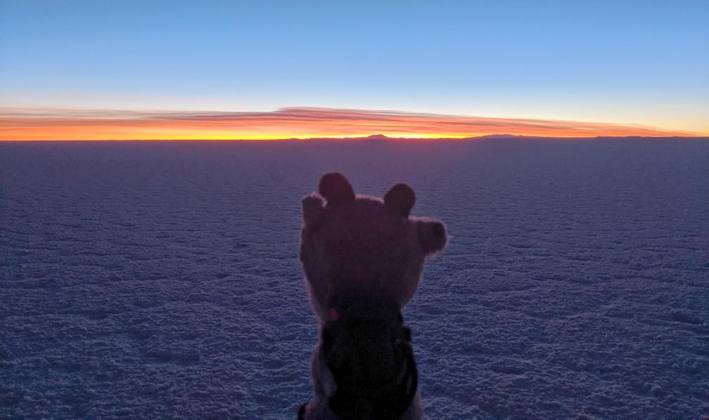 La petite Biquette observe le lever de soleil dans le salar d'Uyuni
