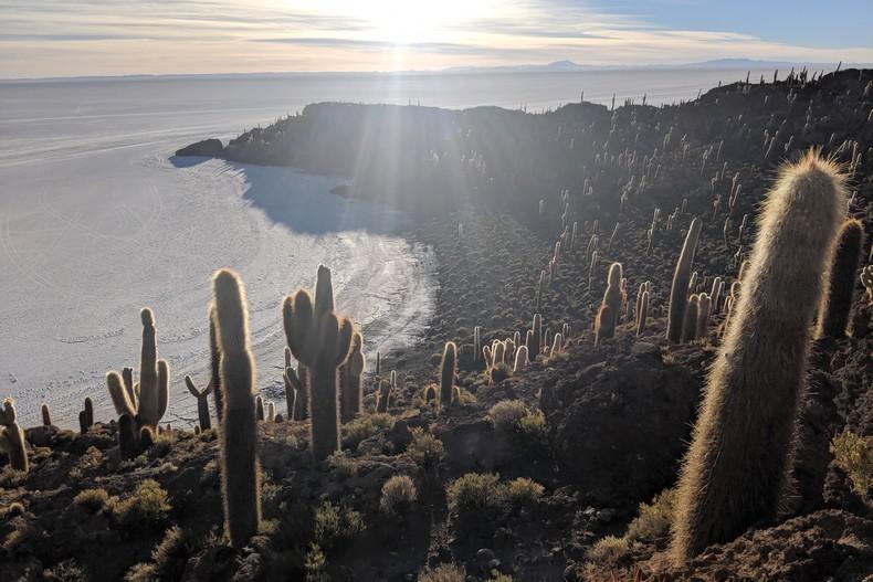 Le soleil rayonne sur les cactus de Ile d'Incahuasi au milieu du salar d'Uyuni