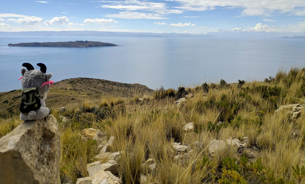 La petite Biquette observe l'île de la Lune sur le lac Titicaca