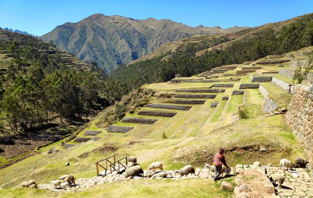 Un jeune berger descend ses moutons dans les ruines de Chinchero