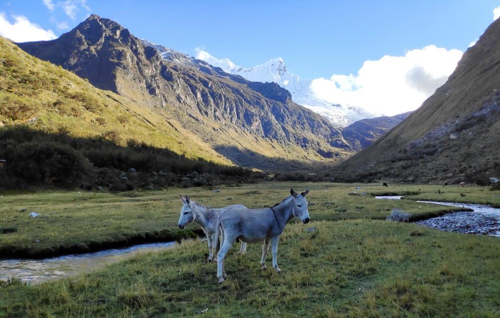 Des ânes dans la vallée sur la randonnée de la lagune 69 au Pérou