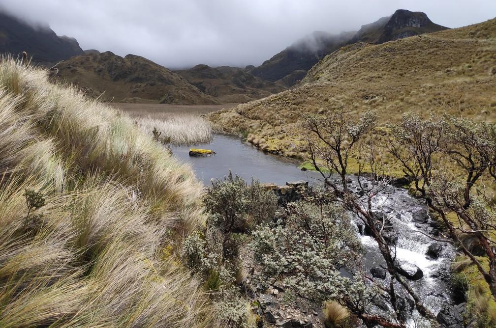 Graminés balayés par le vent près d'une petite cascade dans le parc Las Lajas près de Cuenca